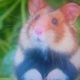 hamster d'Alsace