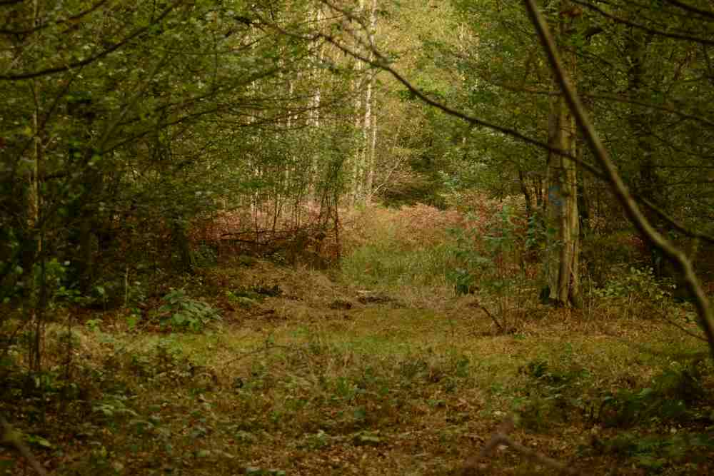 Veillée des arbres... Aux arbres citoyens ! @ ZAD du Moulin | Kolbsheim | Grand Est | France