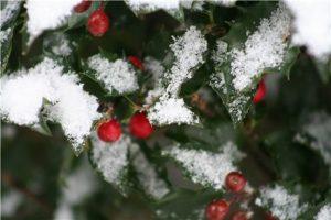 Cérémonie de Noël et plantation à Kolbsheim @ Kolbsheim
